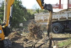 Dessouchage avec pelle mécanique en Pyrénées Atlantique 64 et Landes 40 144 - ECHEGARAY Ñaño élagage