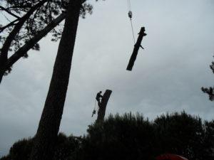 Abattage par démontage à la nacelle et grue en Pyrénées Atlantique 64 et Landes 40 4195 - ECHEGARAY Ñaño élagage