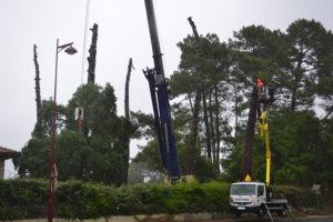 Abattage par démontage à la nacelle et grue en Pyrénées Atlantique 64 et Landes 40 995 - ECHEGARAY Ñaño élagage