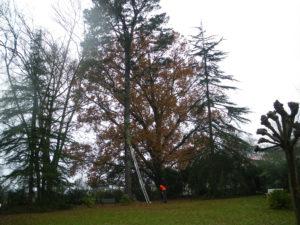 Abattage par démontage sur corde en Pyrénées Atlantique 64 et Landes 40 1037 - ECHEGARAY Ñaño élagage