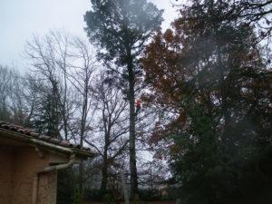 Abattage par démontage sur corde en Pyrénées Atlantique 64 et Landes 40 1052 - ECHEGARAY Ñaño élagage