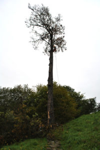 Abattage par démontage sur corde en Pyrénées Atlantique 64 et Landes 40 17 - ECHEGARAY Ñaño élagage