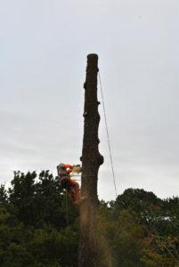 Abattage par démontage sur corde en Pyrénées Atlantique 64 et Landes 40 37 - ECHEGARAY Ñaño élagage