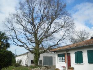 Taille douce des arbres en Pyrénées Atlantique 64 et Landes 40 2672 - ECHEGARAY Ñaño élagage